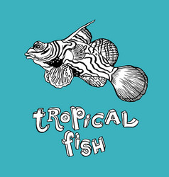 tropical fish - hand drawing vector image