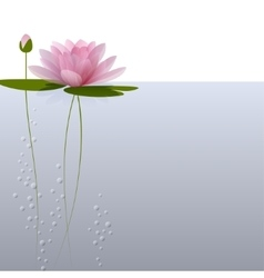 Waterlily on the water vector