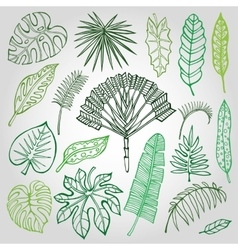 Tropical palm leavesbranches setoutlinegreen vector
