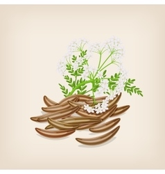 Cumin seed with flowers and leaves vector