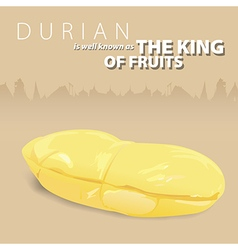 Durian the king of Thai fruits vector image