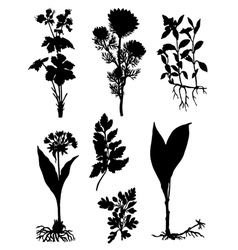Collection of silhouettes of herbs vector image