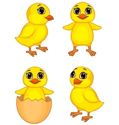 Funny chick cartoon vector