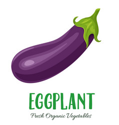 eggplant vegetable vector image