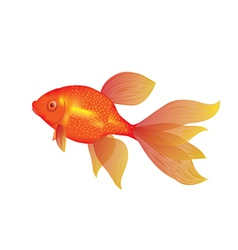 Gold fish vector