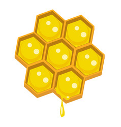 honeycomp vector image