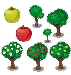 Planting and cultivation of green and red apple vector image