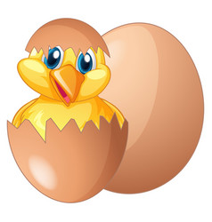 chick coming out from egg vector image