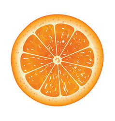 orange slice isolated on white background vector image