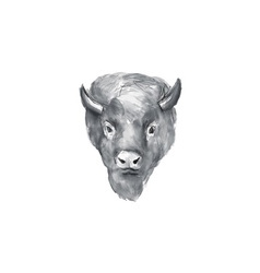 American Bison Head Watercolor vector image
