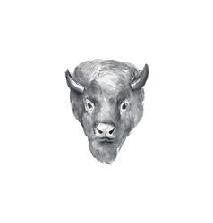 American bison head watercolor vector