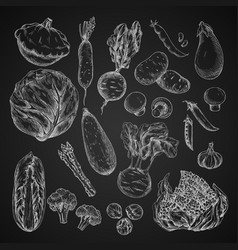 vegetable bean and mushroom sketch on chalkboard vector image vector image