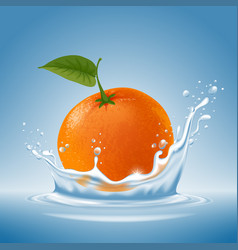 Mandarin in water splash vector