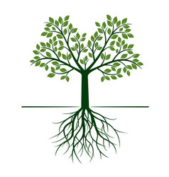 green tree with roots and leafs vector image vector image