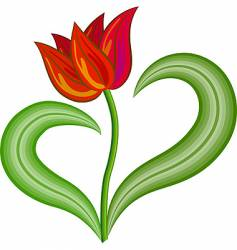 red tulip flower vector image vector image