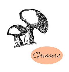 Greasers mushrooms ink vector