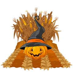 Pumpkin on corn maze vector image vector image