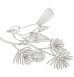Titmouse on a pine branch vector image