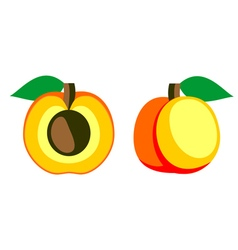 Detailed icon of apricot whole and half vector