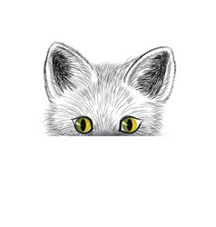 Cats head kitten face sketch cat hiding isolated vector