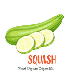 squash vegetable vector image vector image
