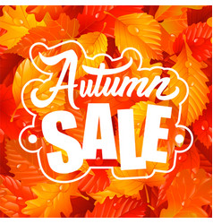 Lettering of autumn sale text and fall leaves vector