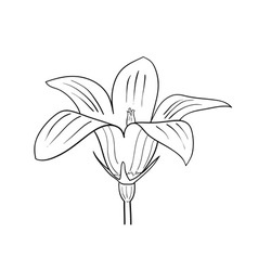 drawing of flower on the white vector