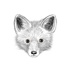 fox baby face wild animal sketch vector image