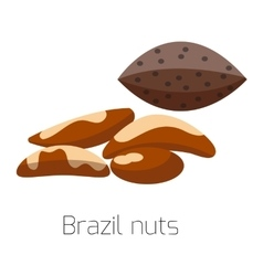 Pile of nuts Brazil vector image