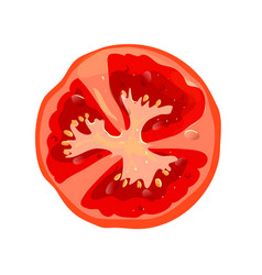 Round tomato slice isolated vegetables ingredient vector