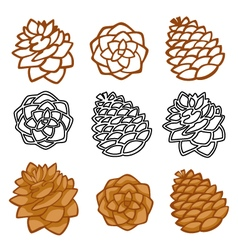Set with pine cones isolated on white vector