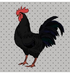 Realistic gorgeous rooster side view vector