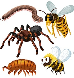 Different kind of dangerous insects vector image vector image