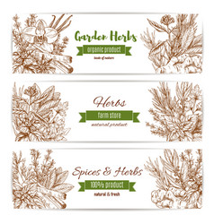 Spice and garden herbs sketch banner set vector