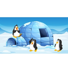 Three penguins near an igloo vector image vector image