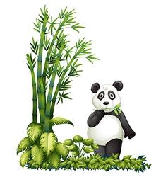 A panda eating vector image