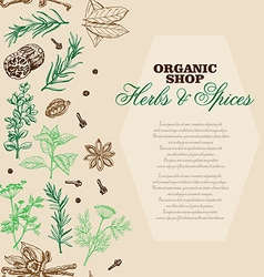 Background with spices and herbs vector