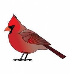 cardinal vector image vector image