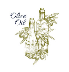Olive oil sketch and fresh green olives vector