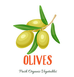 Olives vegetable vector