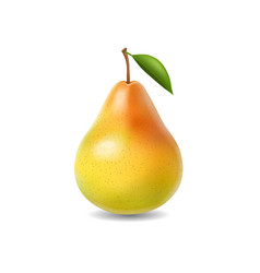 pear realistic isolated vector image vector image