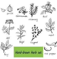 Background hand drawn herbs and spices set vector