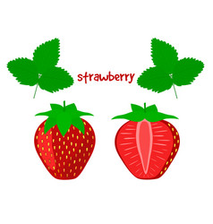 Ripe juicy strawberry on a white background vector