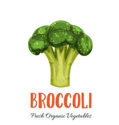 broccoli vegetable vector image