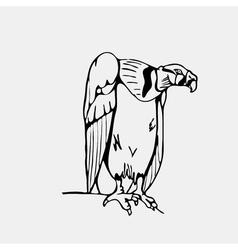 Hand-drawn pencil graphics vulture eagle osprey vector