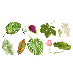 Tropial plants set vector