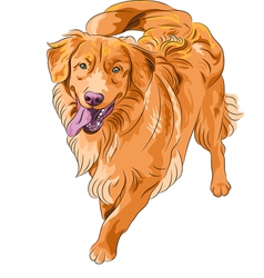 Golden retriever dog vector