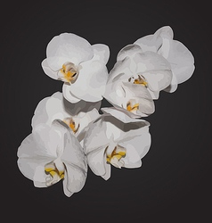 Romantic beautiful orchids blossom isolated on vector