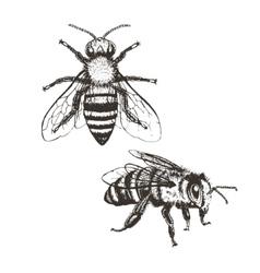 Bee vintage set vector
