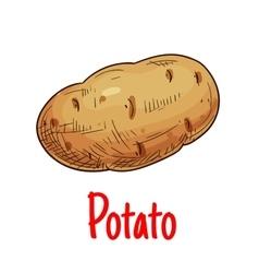 Potato tuber vegetable sketch icon vector image